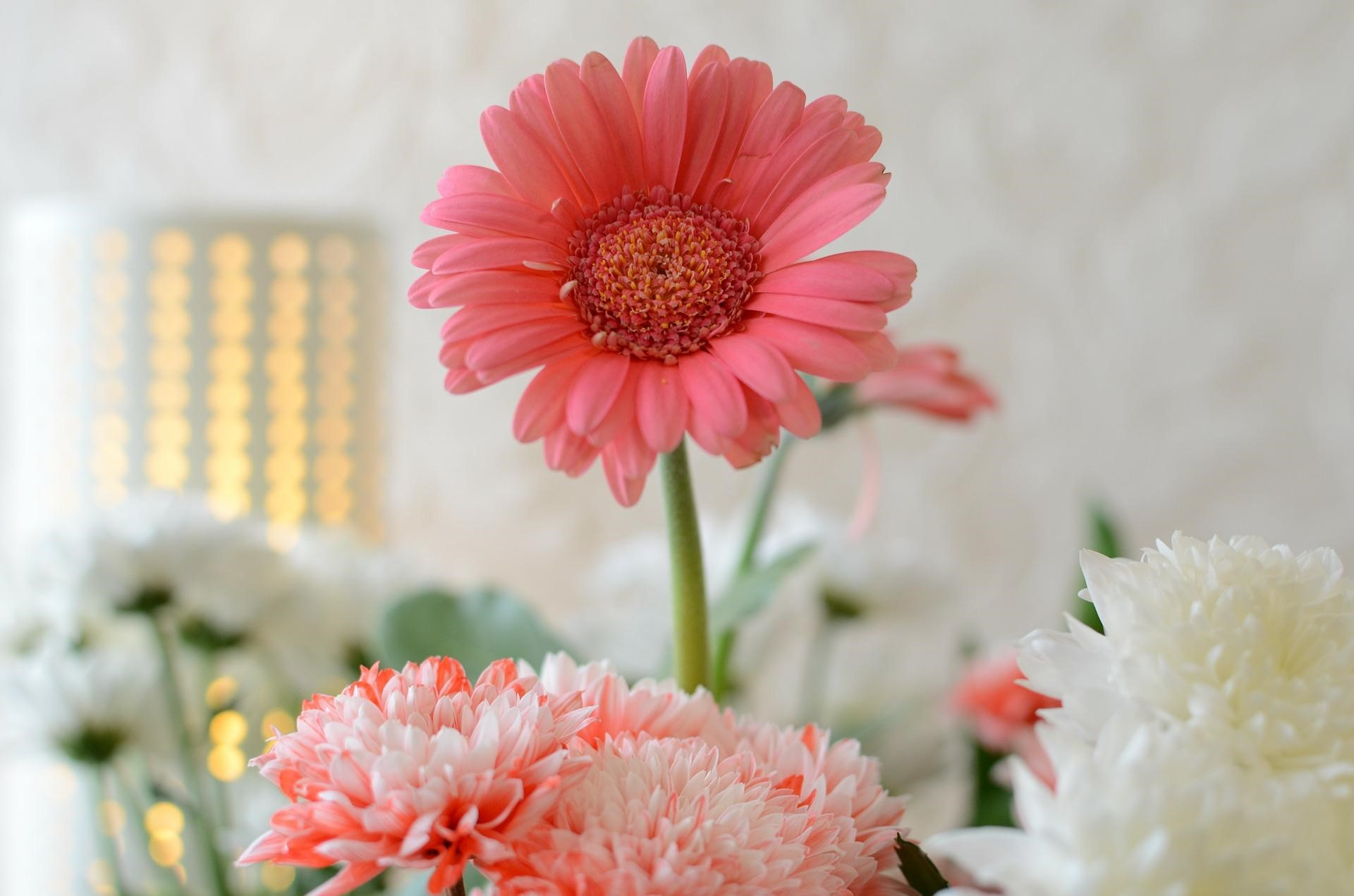 Most Mesmerizing Flowers Fit For Your Loved Ones 1